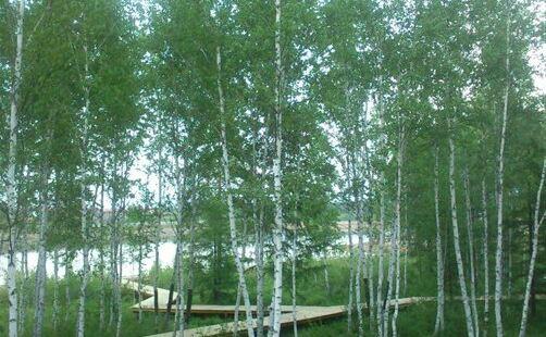 白銀納鄂倫春民族風情園