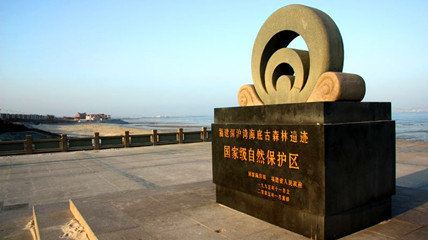 Shenhuwan Submarine Ancient Forest Relics Nature Reserve