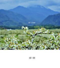 光泽游记图文-【原创】福建光泽:春风催开漫山梨花似雪