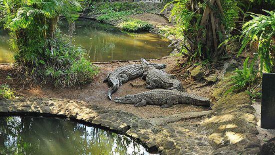拉凡尼勒鱷魚公園