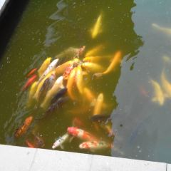 水上公園用戶圖片