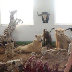 歡樂動物匯用戶圖片