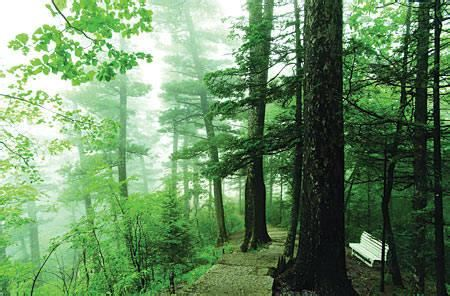 梅花山國家森林公園