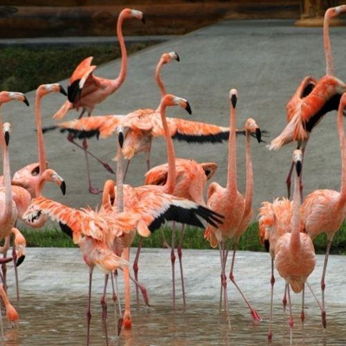 북방(베이팡) 삼림동물원