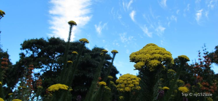 Kirstenbosch Botanical Garden2