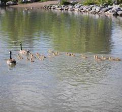 Inglewood Bird Sanctuary User Photo