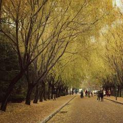 바오룽 낙원 여행 사진