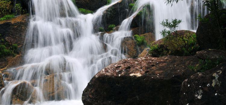 Dongxing Pingfeng Rainforest Park1