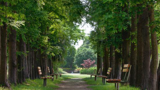 Binjiang Forest Park