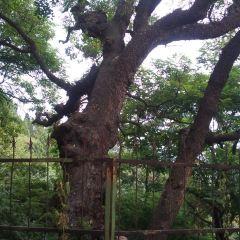 Huashanguojia Forest Park User Photo