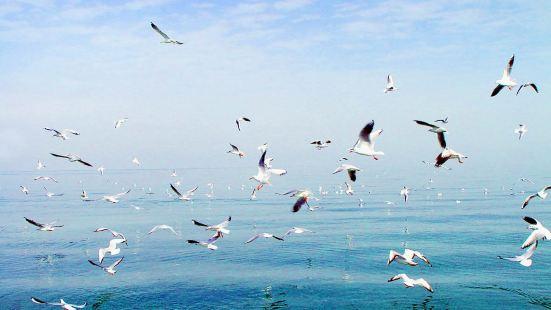 大河口西海漁村景區