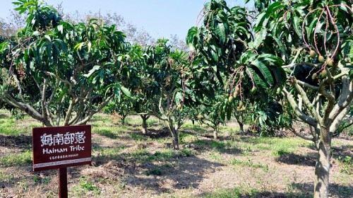 Hainan Tribal Tropical Orchard