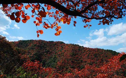 甘山國家森林公園