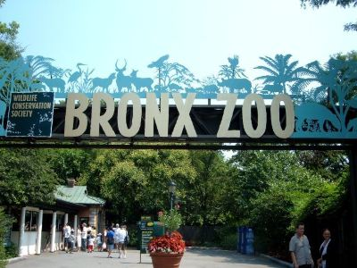 布朗克斯動物園