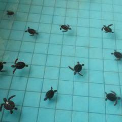 The turtle breeding center User Photo