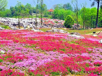 Yaowang Valley Scenic Spot