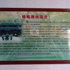 楊枝禪院用戶圖片