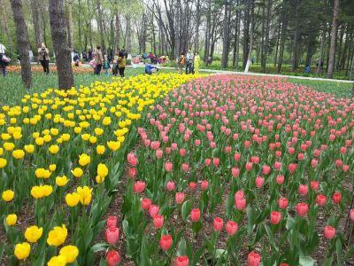 Heilongjiang Forest Botanical Garden