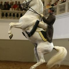 Spanish Riding School User Photo