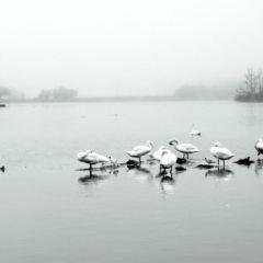 The Copenhagen Lakes User Photo