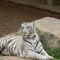 德希烏拉動物園用戶圖片