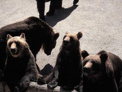 北之森熊牧場