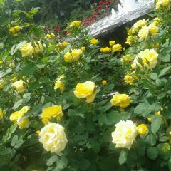 Baotian Health Hot Spring User Photo
