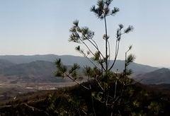 취봉국가삼림공원 여행 사진