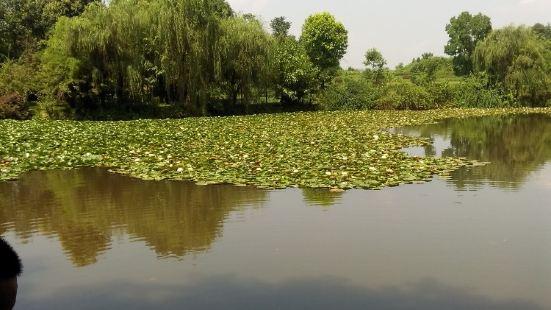 Donghu Park
