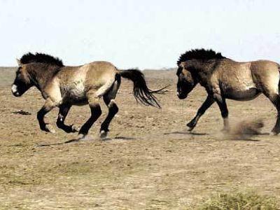 吉木薩爾縣野馬場