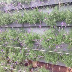 雲頂草莓農場用戶圖片