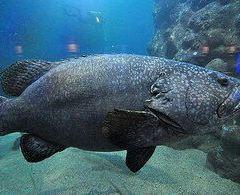 Penghu Aquarium User Photo