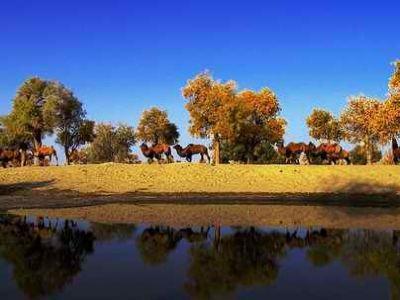 塔里木河與塔克拉瑪幹遊覽區