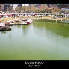 樂遊曲江觀光巴士用戶圖片