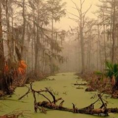 Manchac Swamp User Photo