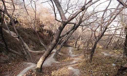 Lanshan Park