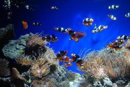 Van Kleef Aquarium