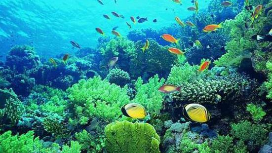 Sanya Coral Reef National Nature Reserve
