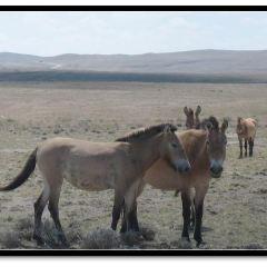卡拉麥裡自然保護區用戶圖片