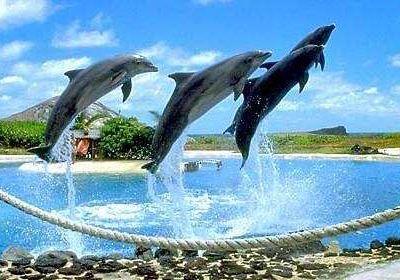 夏威夷海洋公園
