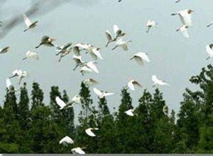 泗洪白鷺保護區