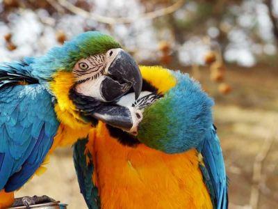 신조산 야생동물원