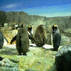 大水族館用戶圖片