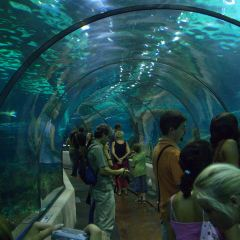 Aquarium de Barcelona User Photo