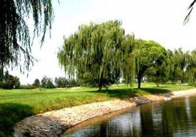天龍灣國際高爾夫俱樂部