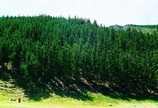 賀蘭山原始森林