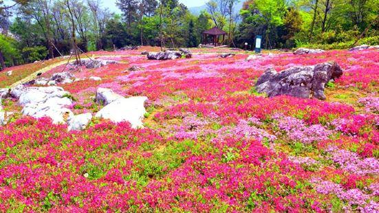 藥王谷賞花