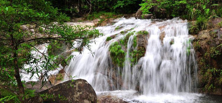 Dongxing Pingfeng Rainforest Park3