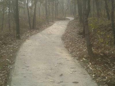 Yushan Forest Park