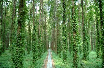 白鹿島國際生態旅遊區